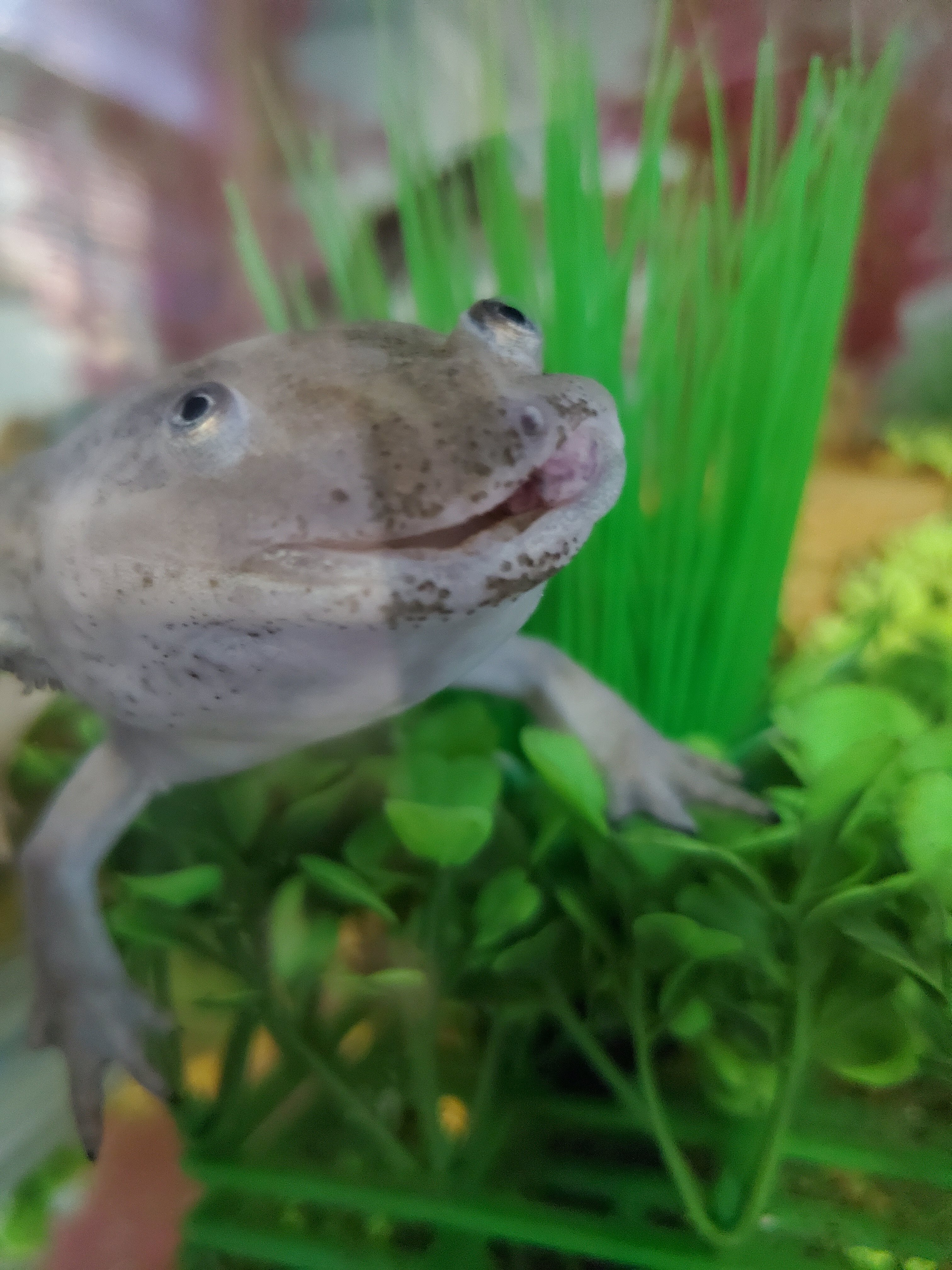 Axolotl growth 2020 d.jpg