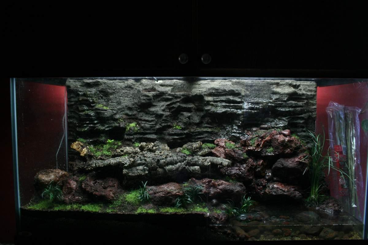 How Do You Grow Moss In A Terrarium Caudata Org