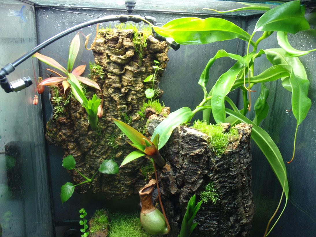 Zoo Med 18 X 18 X 24 Reed Frog Vivarium Caudata Org