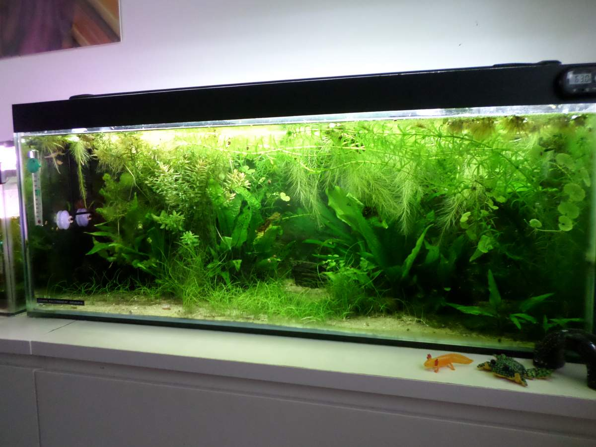 Aquascaping Idea Caudata Org Newts And Salamanders Portal
