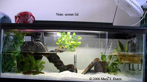 Caudata culture articles cooling for Fish tank ice method