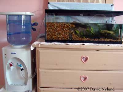 how to keep axolotl tank cool
